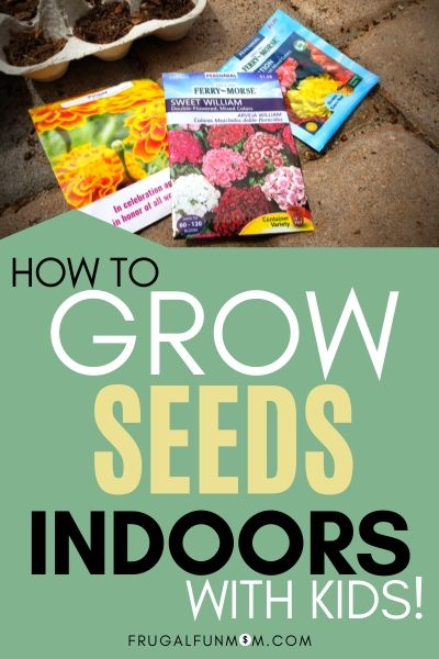 Grow Seeds Indoors With Kids - Save Money On Flowers | Frugal Fun Mom